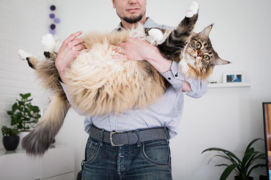 iso pikkis kissa (1)