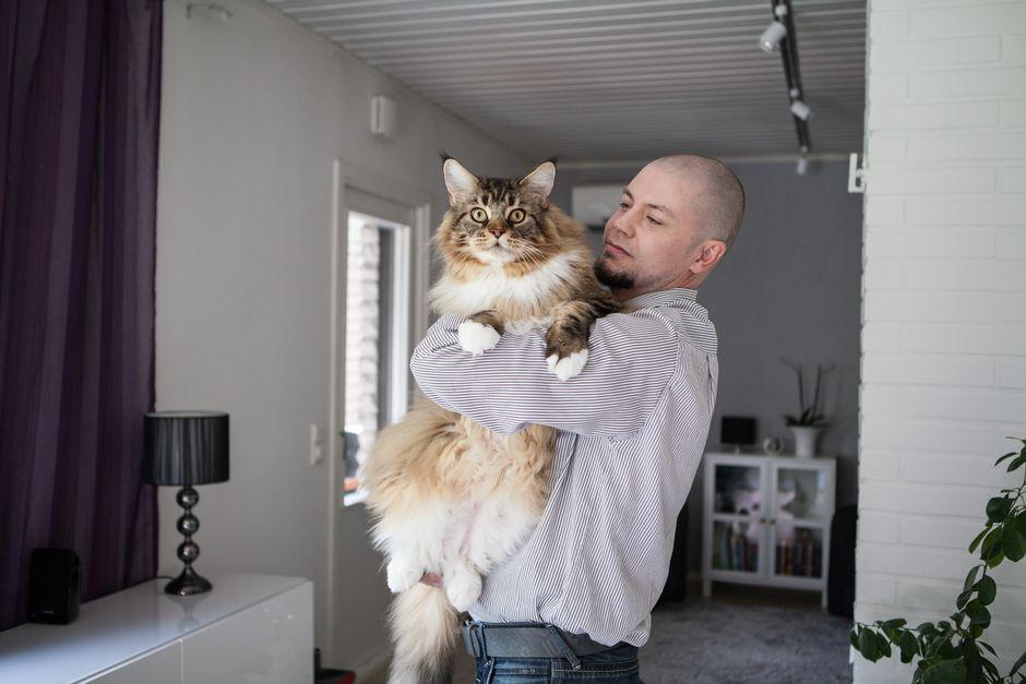 iso pikkis kissa