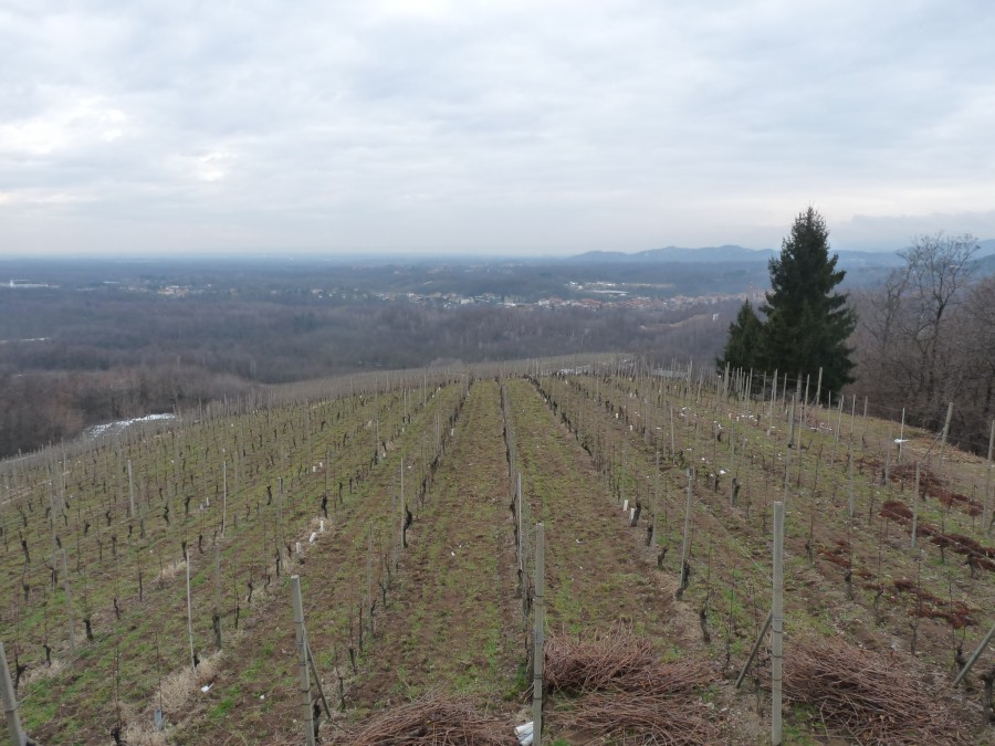 Виноградники Травалини