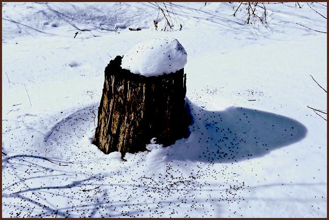 Пенек зимой картинки