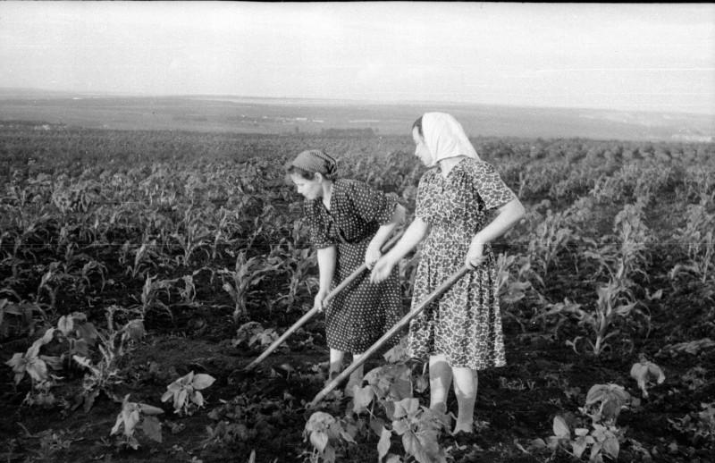 Мама (слева) с подругой Аней Бражко на огороде.