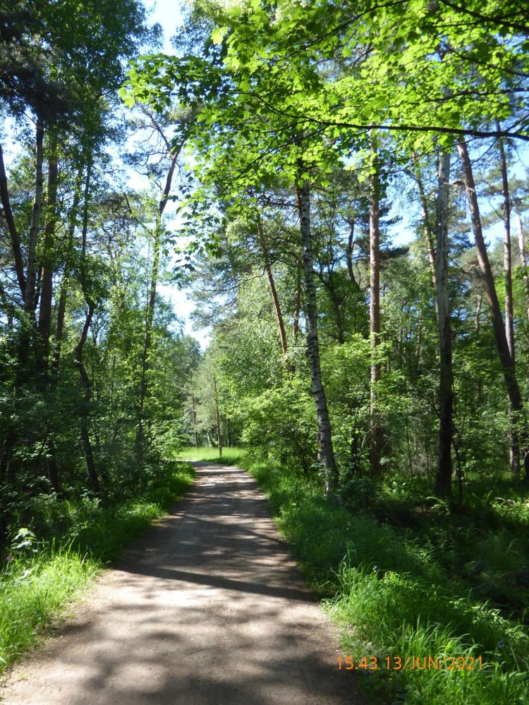 Вело-лесо-озёрное