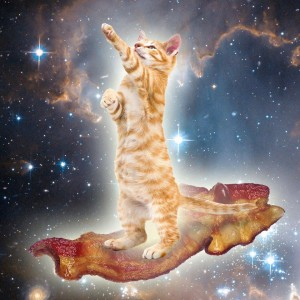 Baconcatlarge.jpg