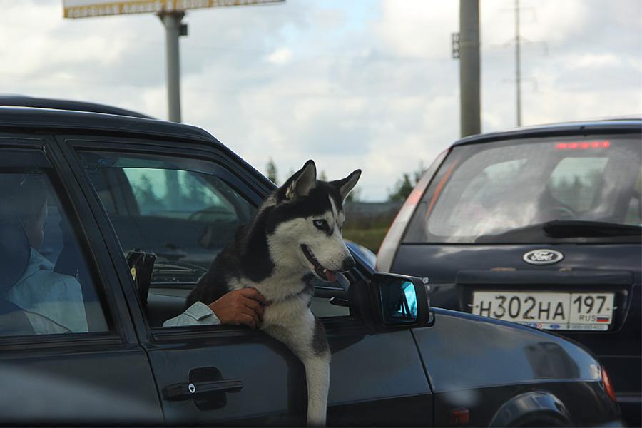 1_собака2