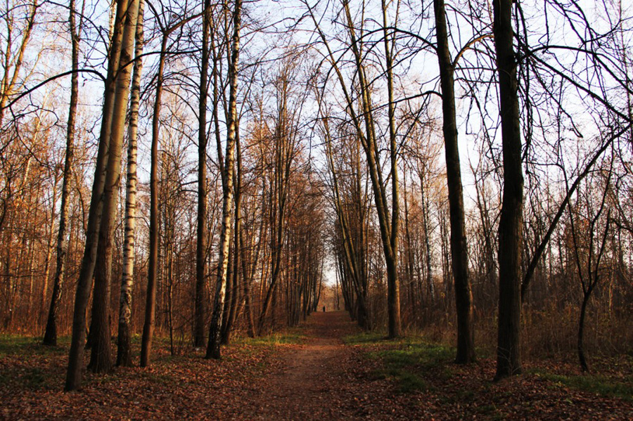 ноябрь в севастопольском