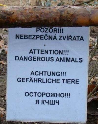 плакат с твариной