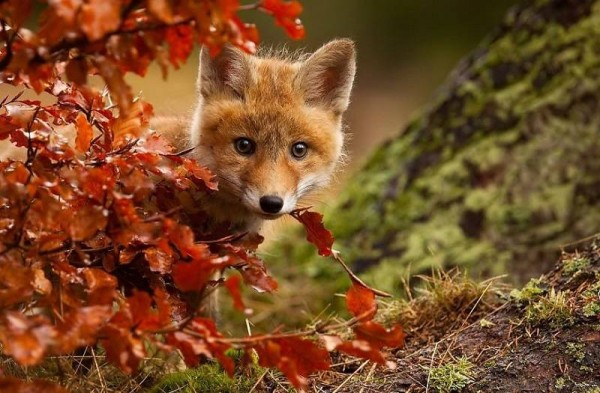 autumn-animals-3