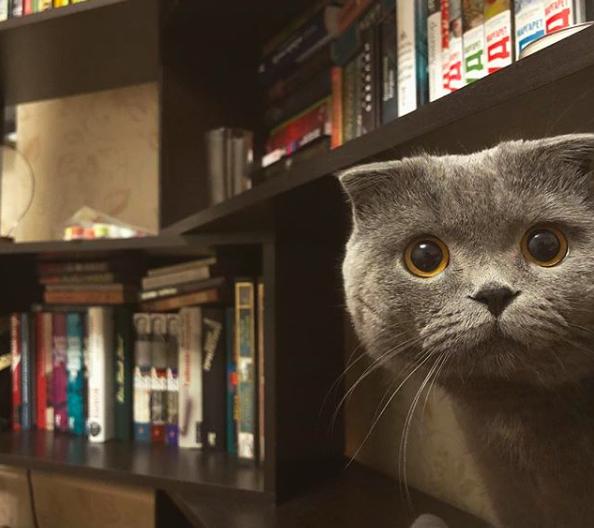редакторский кот (@brioline_bruce) • Фото и видео в Instagram 2020-10-29 12-35-49