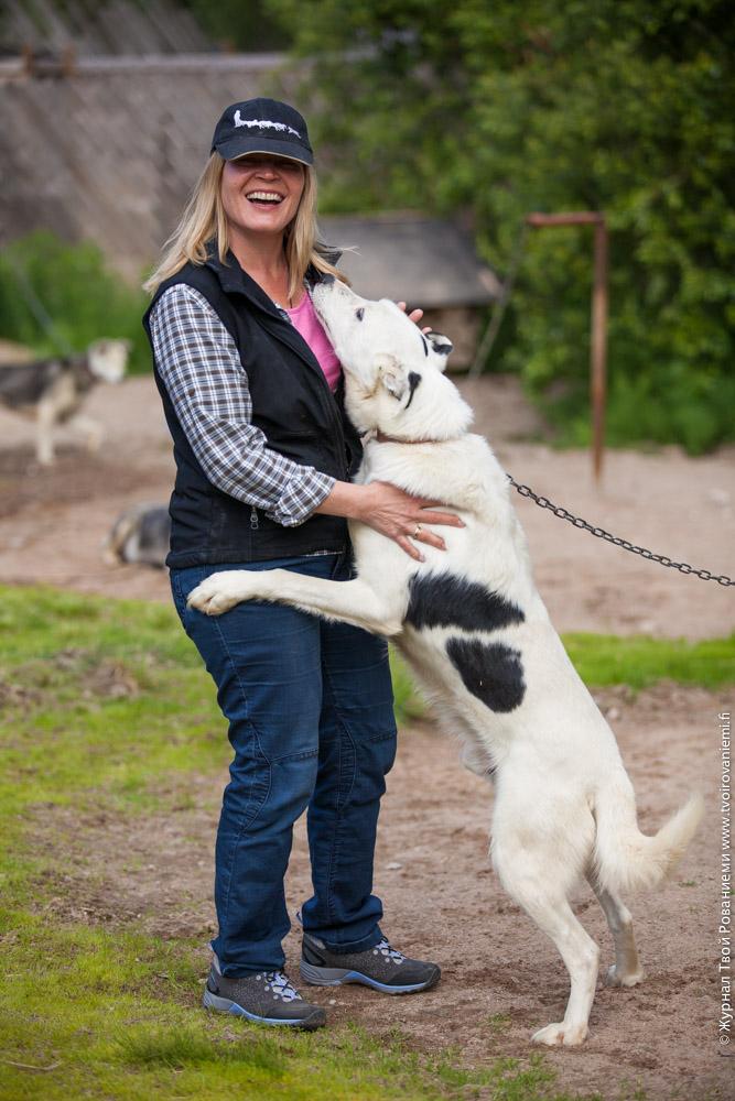 На собаководческой ферме живет более ста лаек.