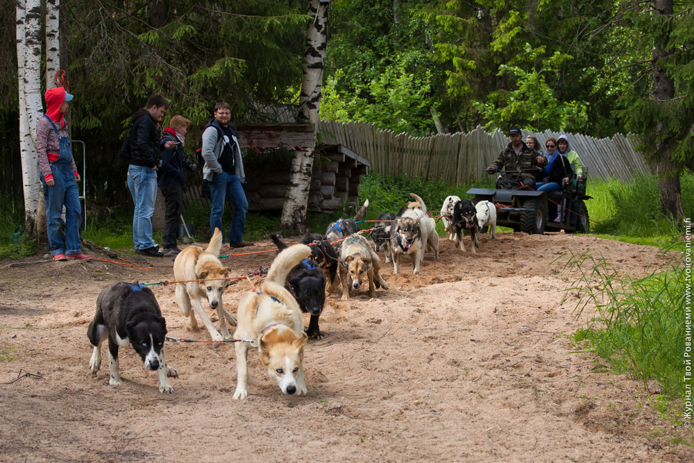 На ферме Huskpoint в Рованиеми на лайках можно прокатиться и летом.