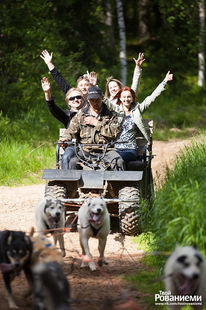 Летнее катание на собаках в Лапландии.