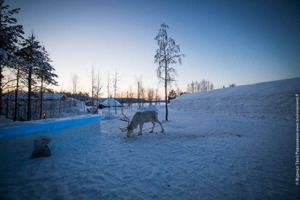 Во дворе ледяного отеля Arctic Snowhotel