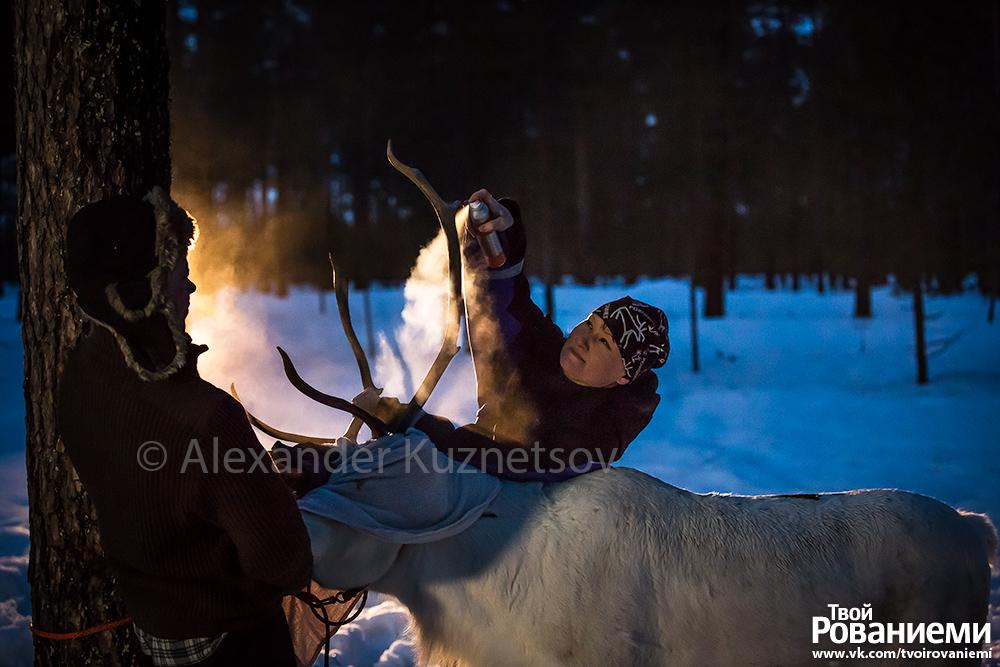 Нанесение светоотражающей краски на рога оленя