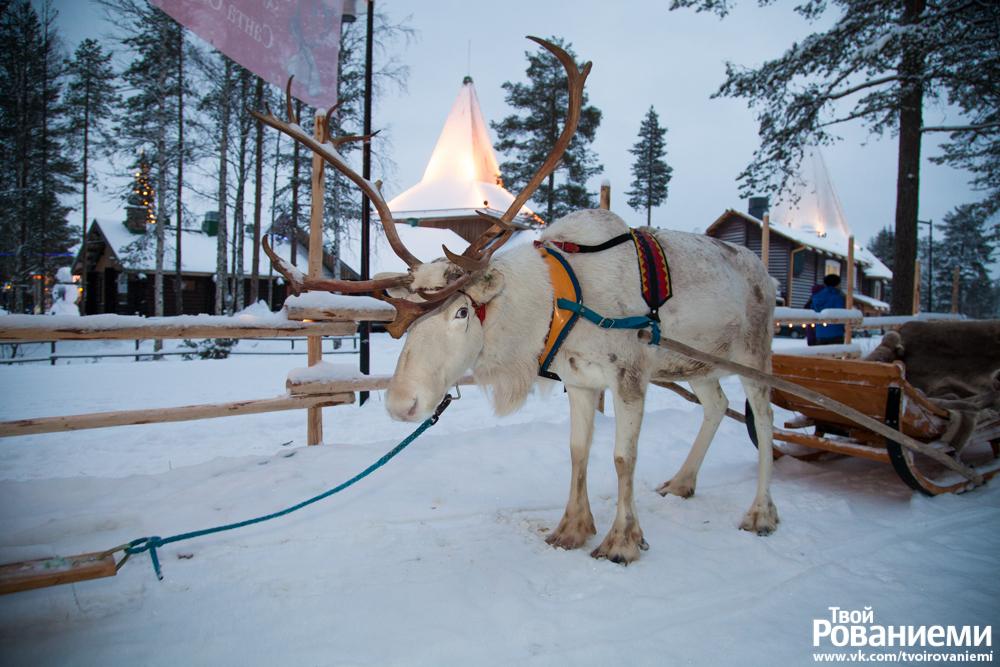 Катание на оленях в Деревне Санта Клауса