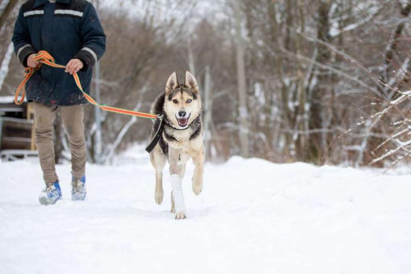 Фото: Фонд помощи бездомным животным «Ника»