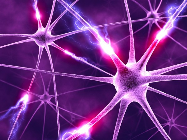 nervova-diyalnist-1024x768
