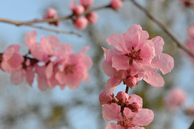 Spring_Amsterdam_11