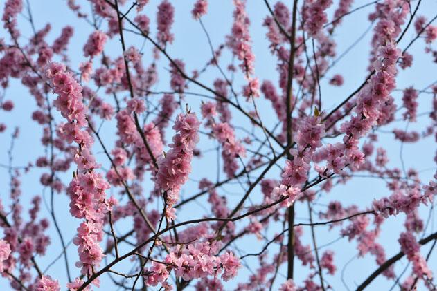 Spring_Amsterdam_41