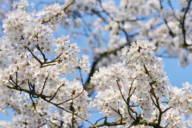 Spring_Amsterdam_43
