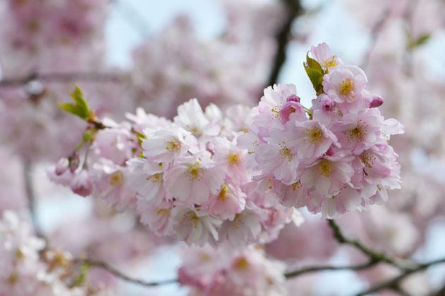 Spring_Amsterdam_55