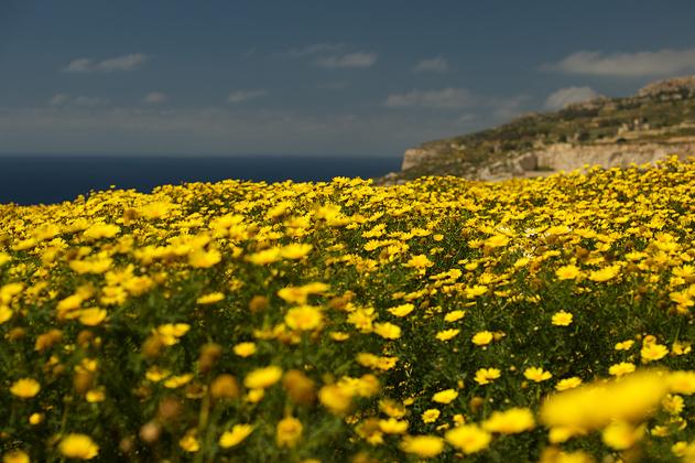 Malta_08