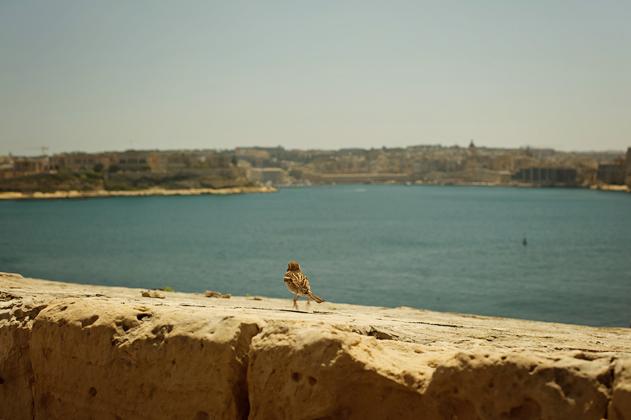 Malta_Valetta_web_13