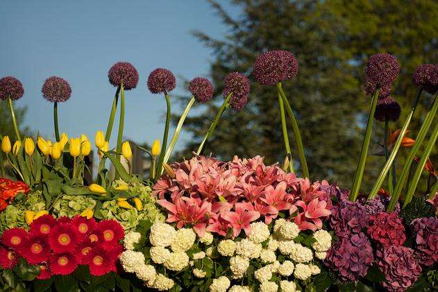 Flower_parade_03