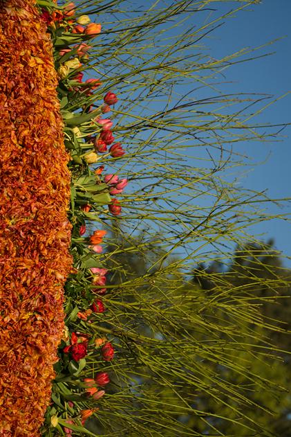 Flower_parade_11