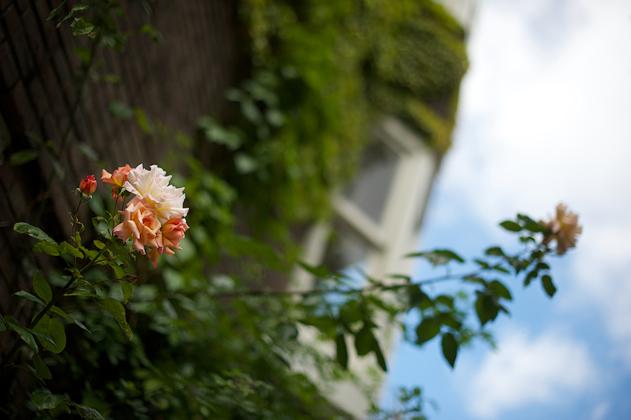 Summer_flower_09