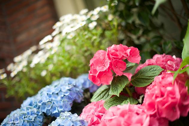 Summer_flower_06