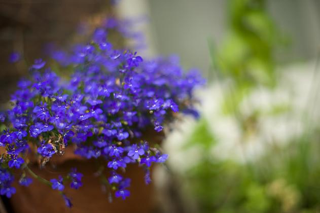 Summer_flower_10