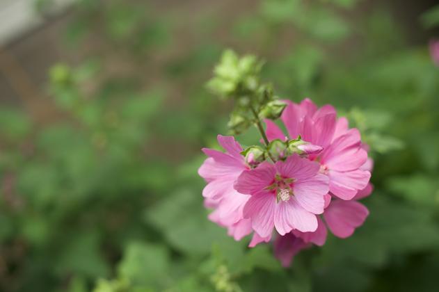 Summer_flower_12