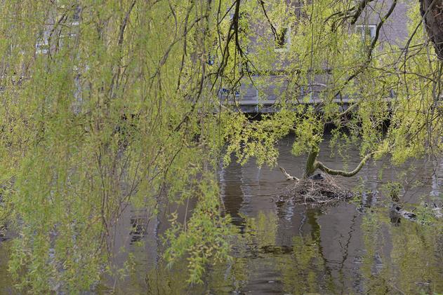 Delft_16