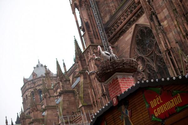 Strasbourg_010