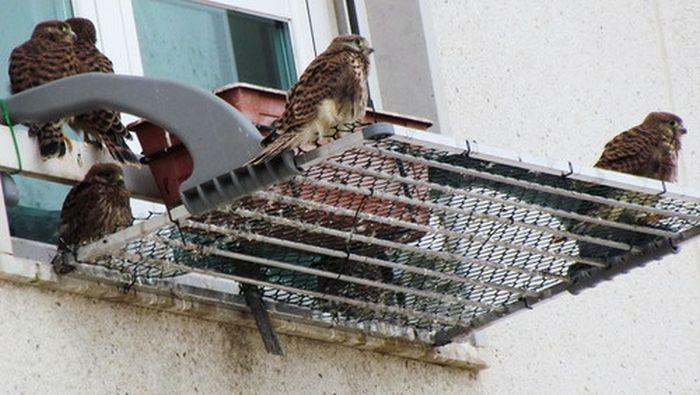 just_a_falcon_06