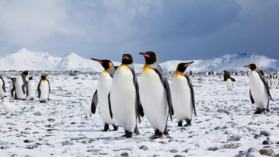 antarktida_4