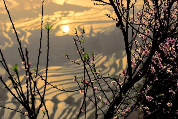 _mg_2785_yy_springtime