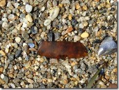 Beach Glass 032