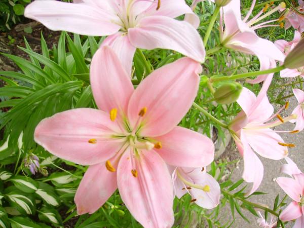 Flowers Car 072