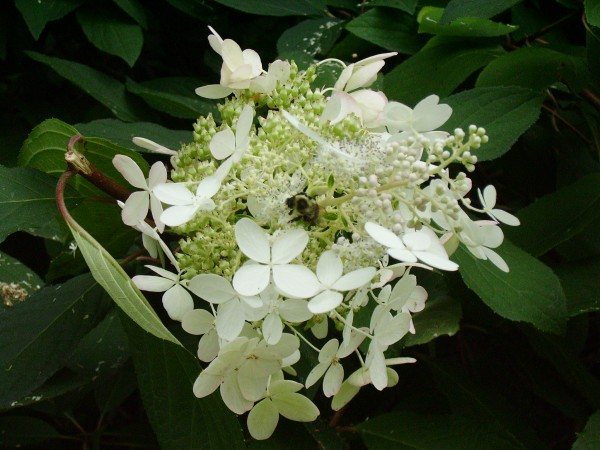 Flowers Car 037