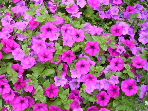 Flowers Car 067