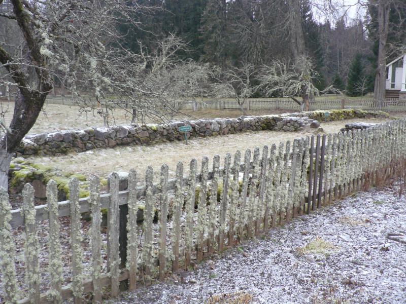 Сад и фундамент каретного сарая у дороги в центр усадьбы. Забор и деревья покрыты лишайниками - признак того, что воздух в этом месте очень чистый.