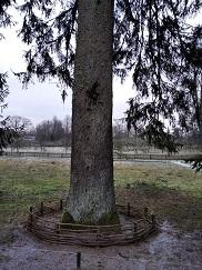 Деревья, сохранившиеся с пушкинских времен, тщательно сохраняют