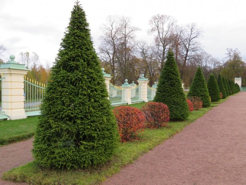 Аллея нижнего парка вдоль ограды со стороны Дворцового проспекта