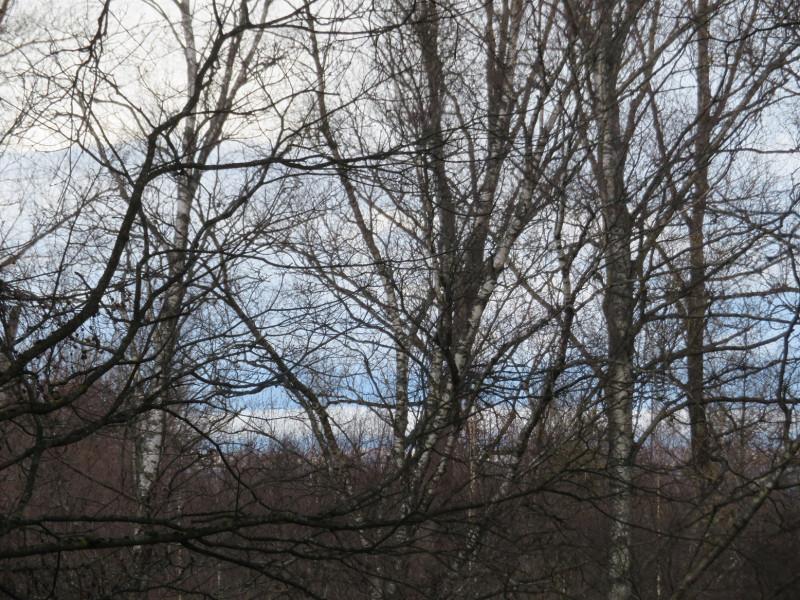 Вид из парка на Финский залив. С внешней стороны дамбы залив еще покрыт льдом.