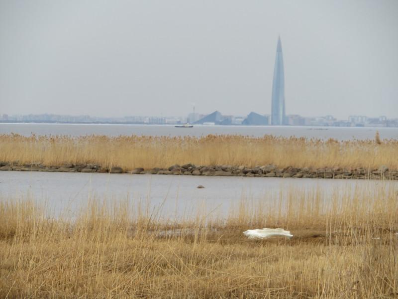 Так просматривается из Александрии башня Газпрома в Лахте на северном берегу Финского залива