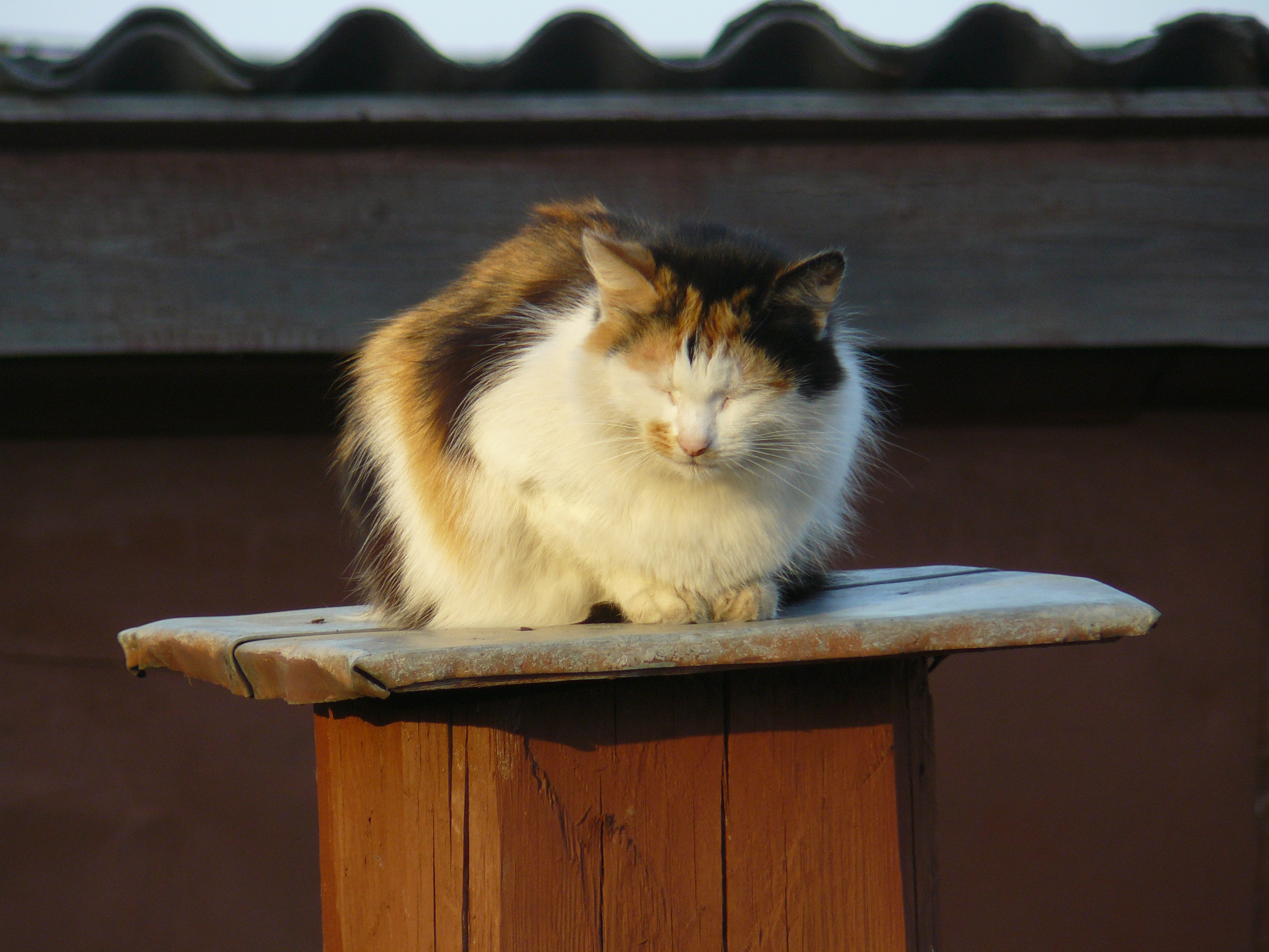 Это еще один кот