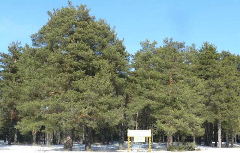 Парк Сидориха, расположенный рядом с Солигаличем в месте слияния р. Кострома с р.  Святица.