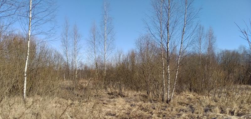В целом фон серо-коричневатый, но чистое голубое небо и яркое солнце формируют хорошее настроение