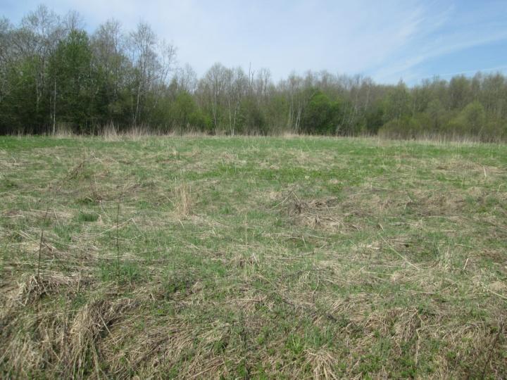 Весеннее не паханное десятилетиями поле